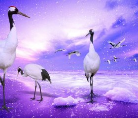 Red Crowned Cranes