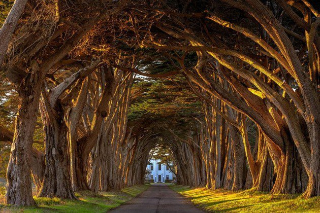 Cypress Tree Tunnel At The Historic Marconi Wireless Station, California