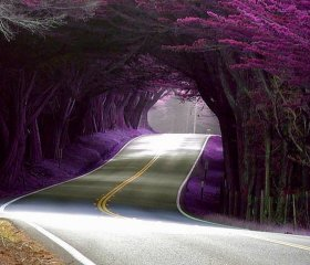 Tree Tunnel in Portugal